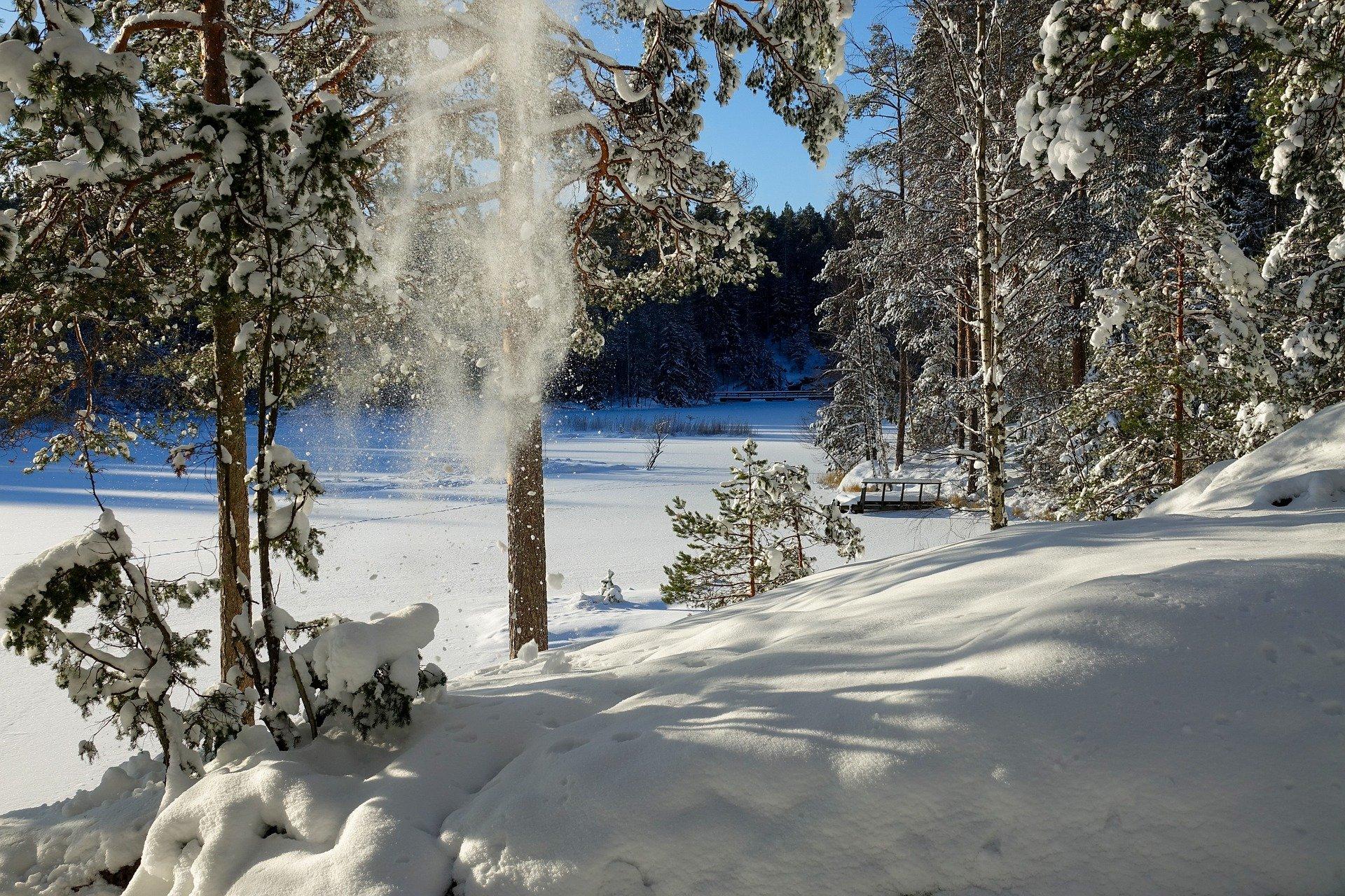 Nuuksio National Park Snowy Landscape