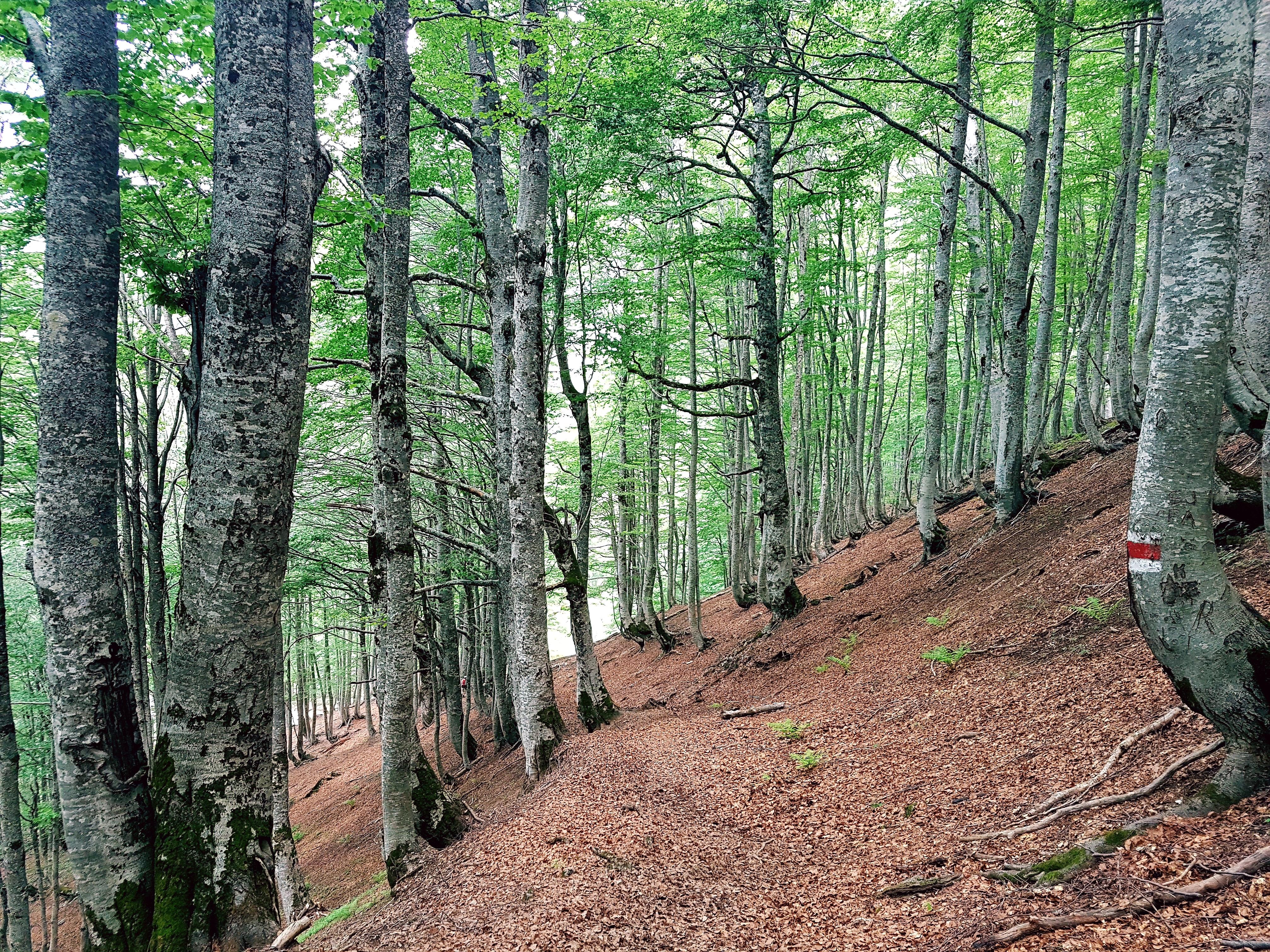 Hiking Views to Kruje