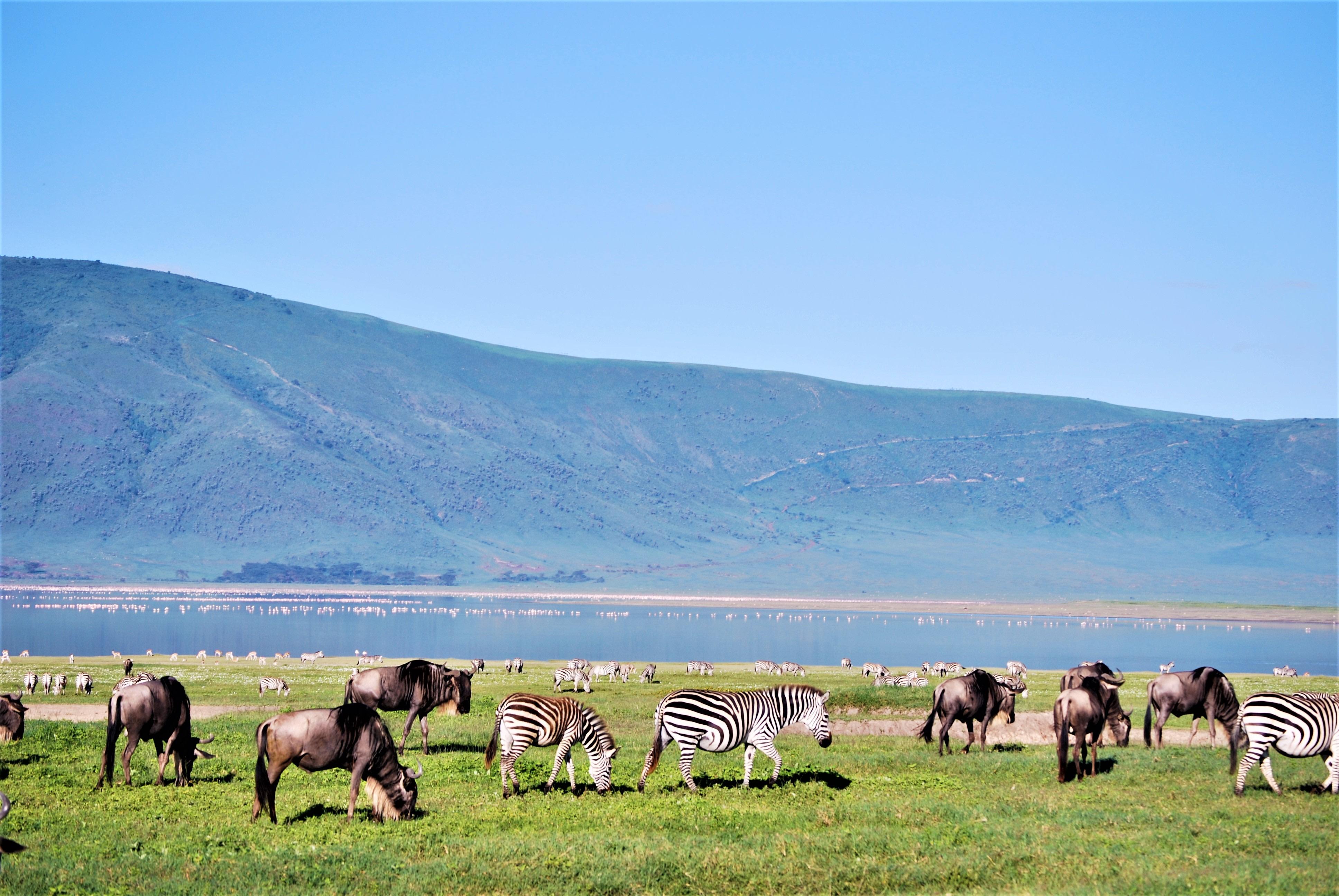 Wide Serengeti Plains
