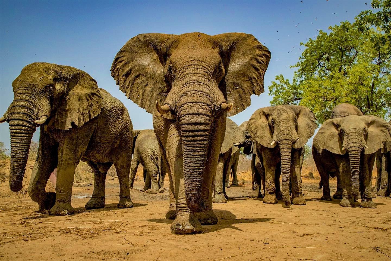 Elephants at Masai Mara