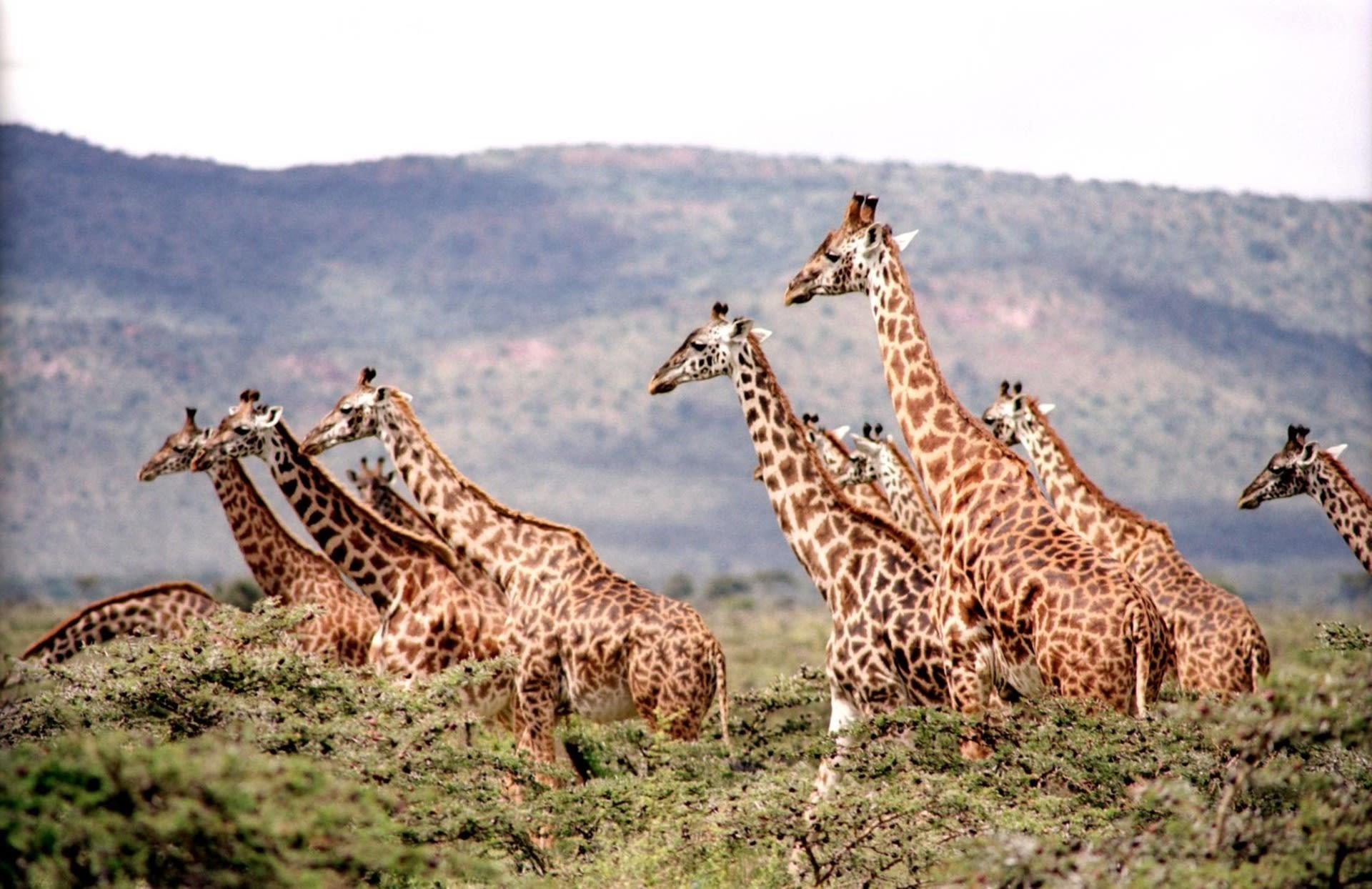 Giraffe Sighting in Banjul Safari Park