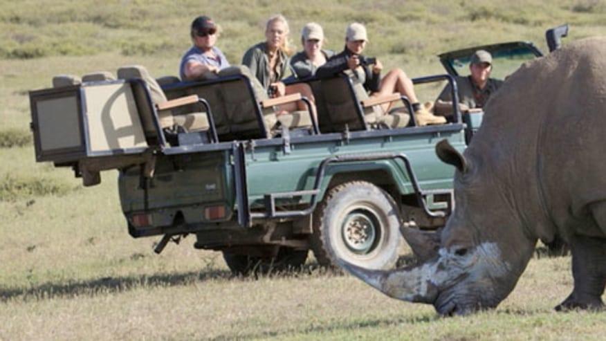 Spot Rhinos on Safari