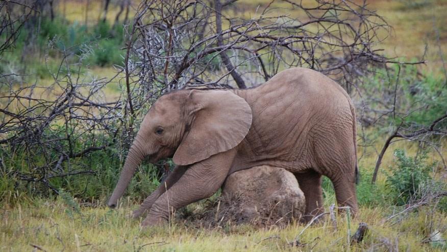 See Baby Elephants