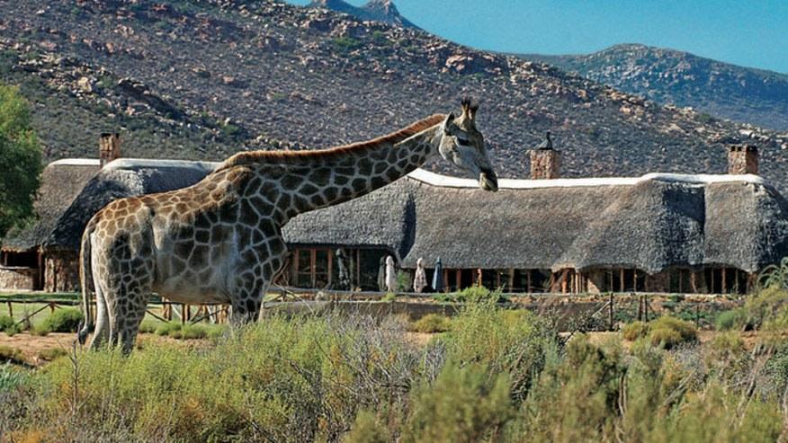 Go on a Giraffe Walk