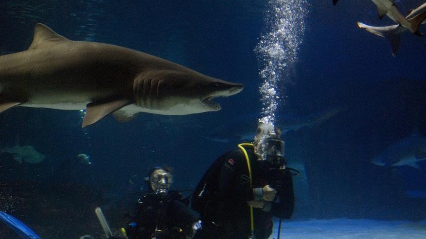 Enjoy Shark Diving
