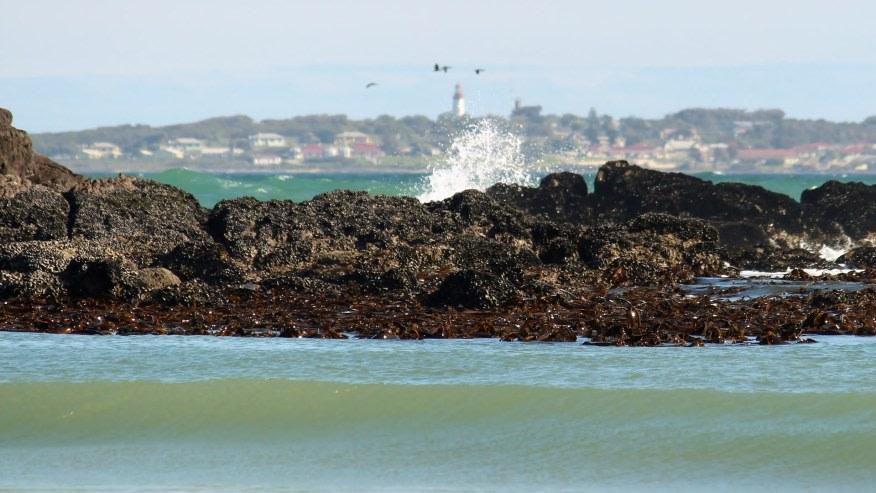 Enjoy the Robben Island Seaside