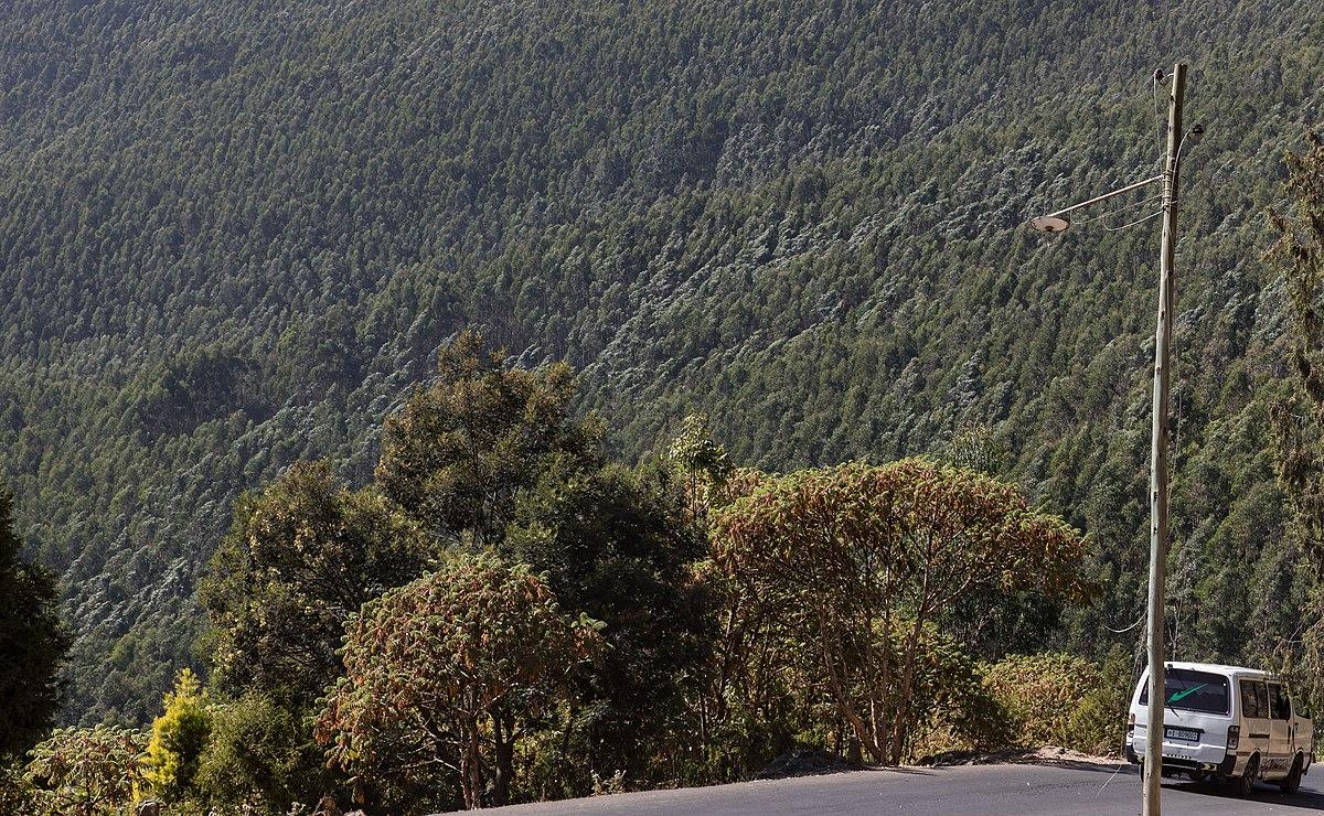 Entonto Mountains