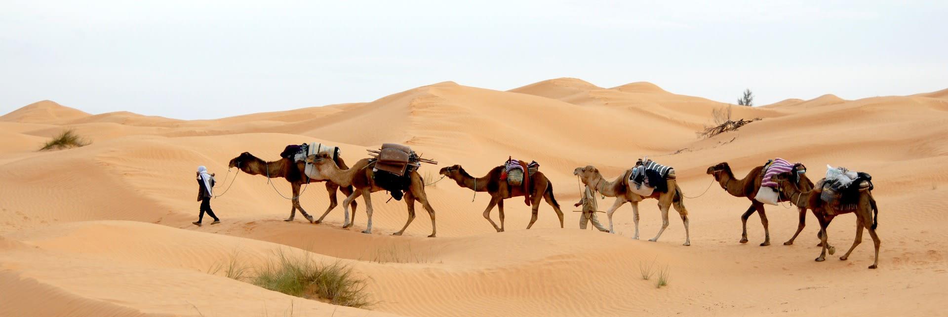 Camel riding in the desert