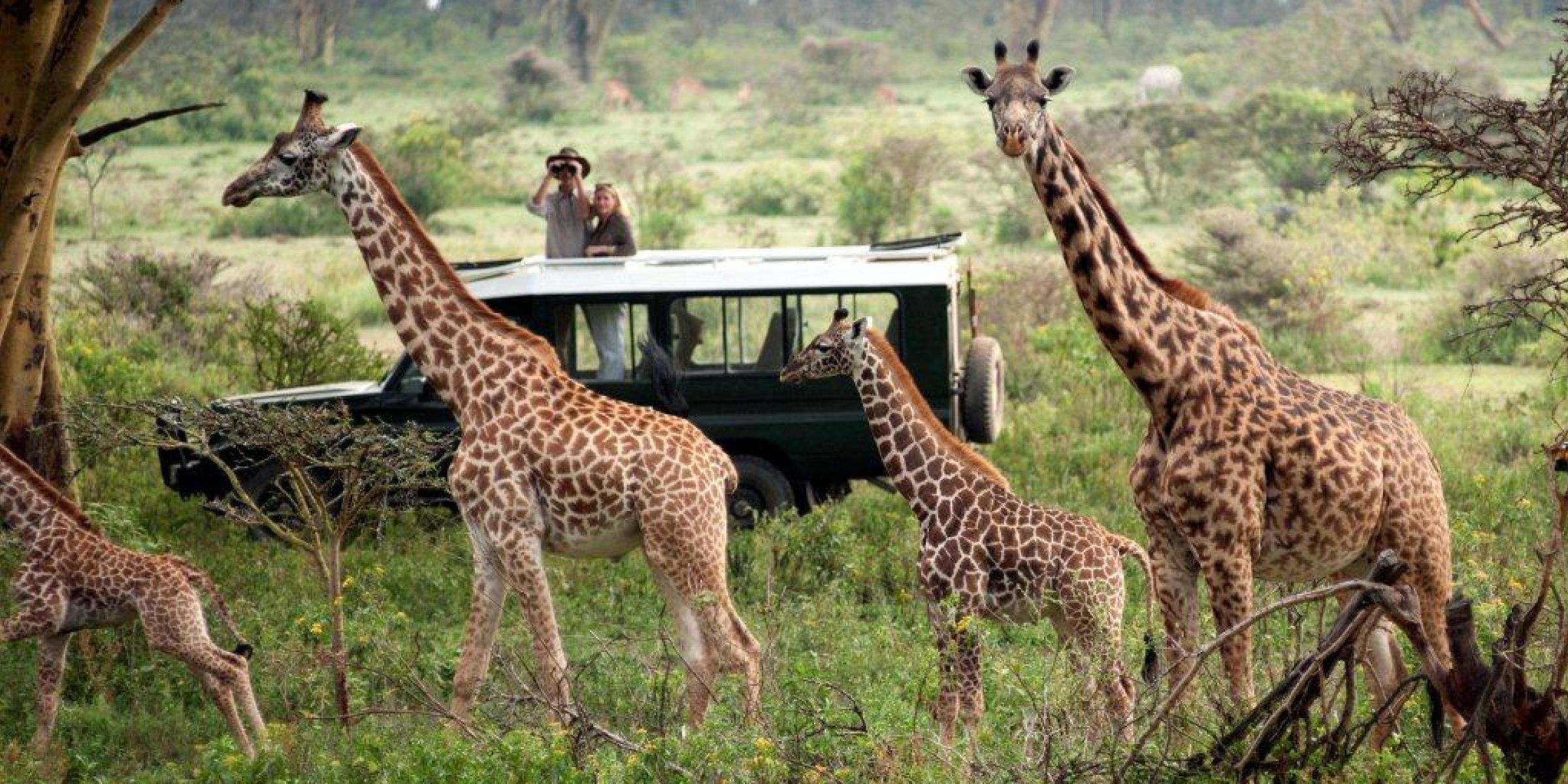 Guests game viewing
