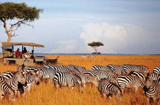 Game viewing in Maasai Mara National Reserve