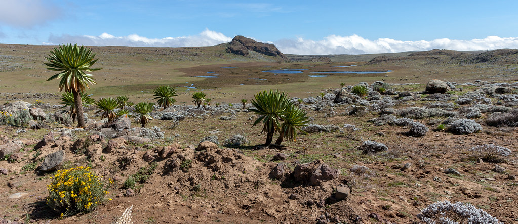 Sanetti Plateau, Bale Mountains