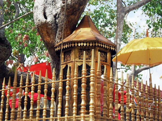 Jaya Sri Maha Bodhi, Sri Lanka