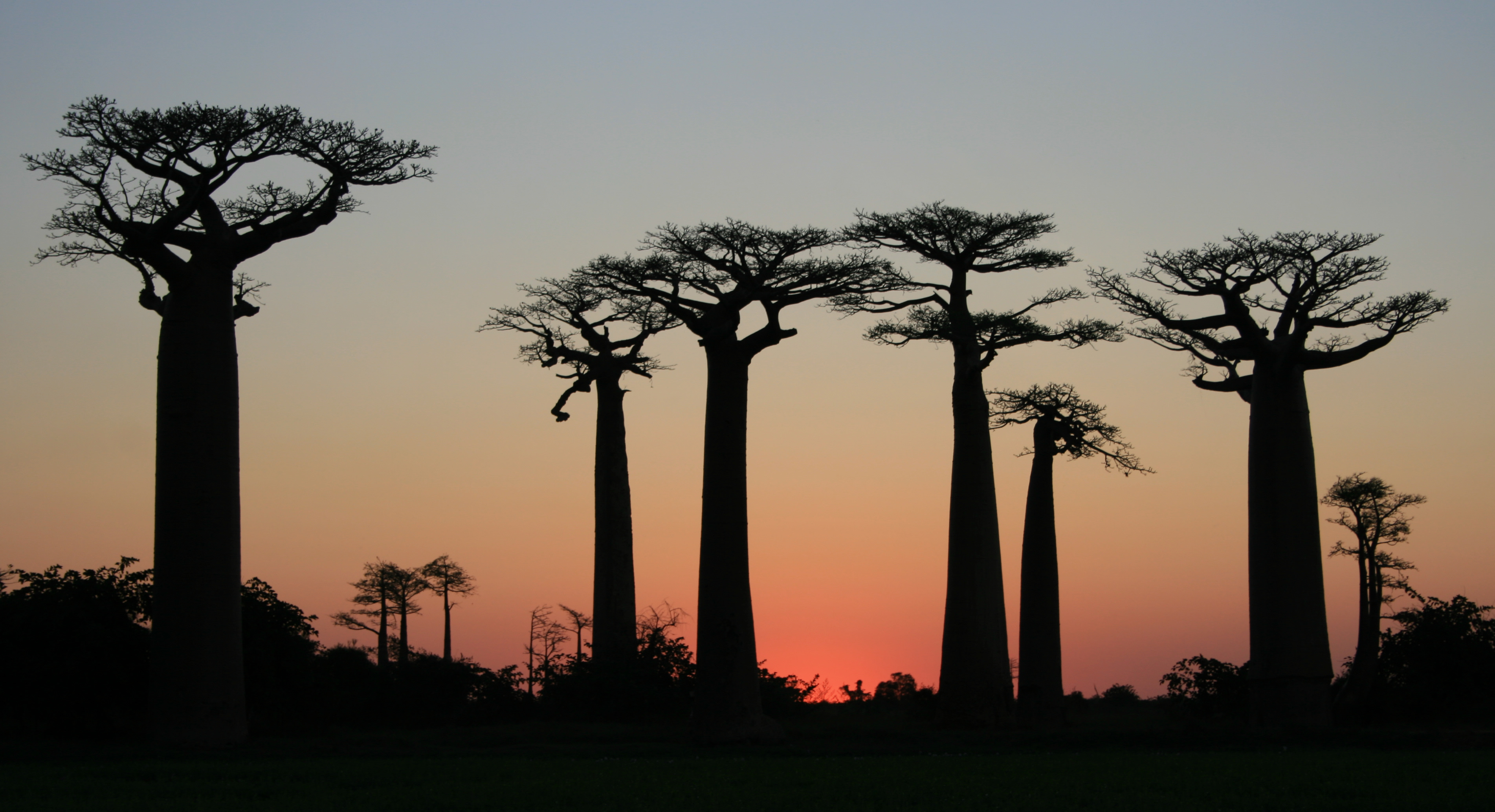 Sunset at the Avenue of the Baobabs