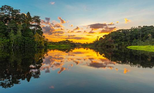 Pacya-Samiria National Reserve