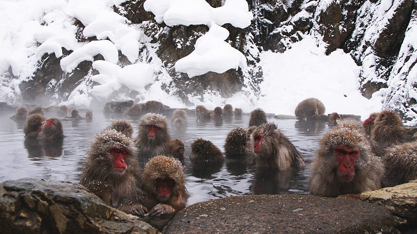Snow Monkeys and Hot Springs in Nagano