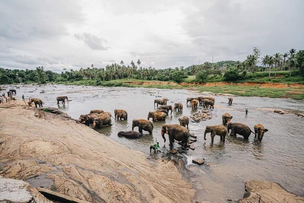 Explore the Pinnawala Elephant Orphanage