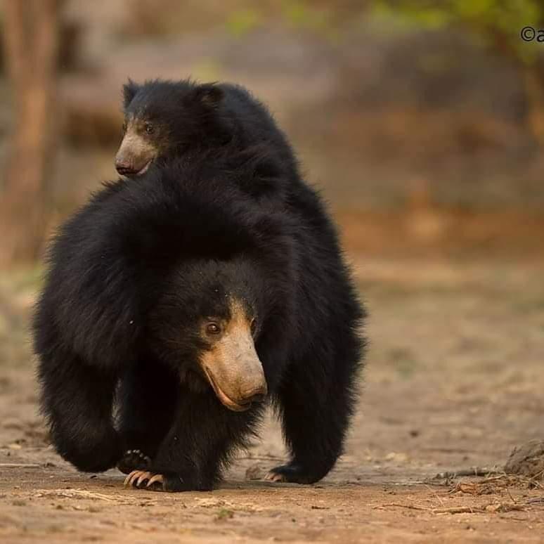 Go on wildlife safaris
