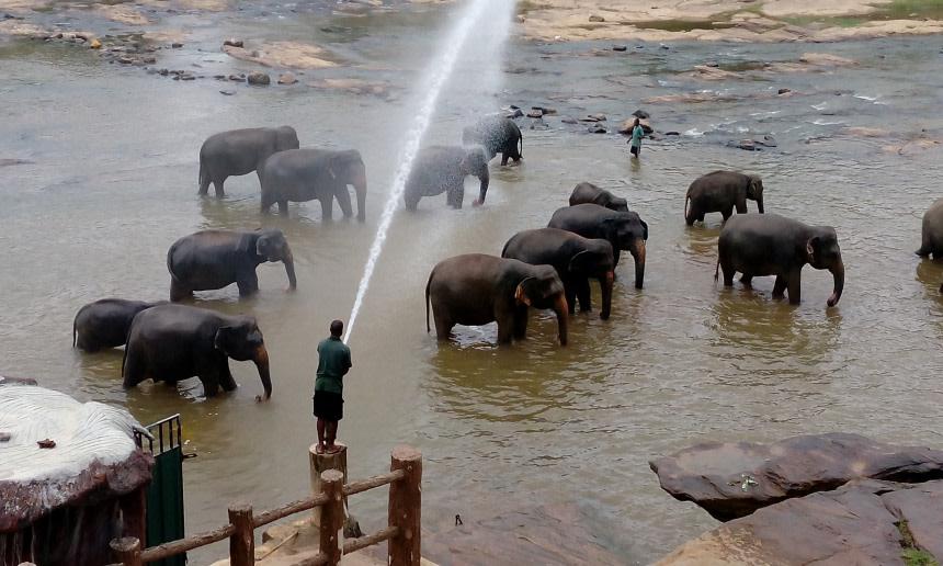 Visit Pinnawala Elephant Orphanage