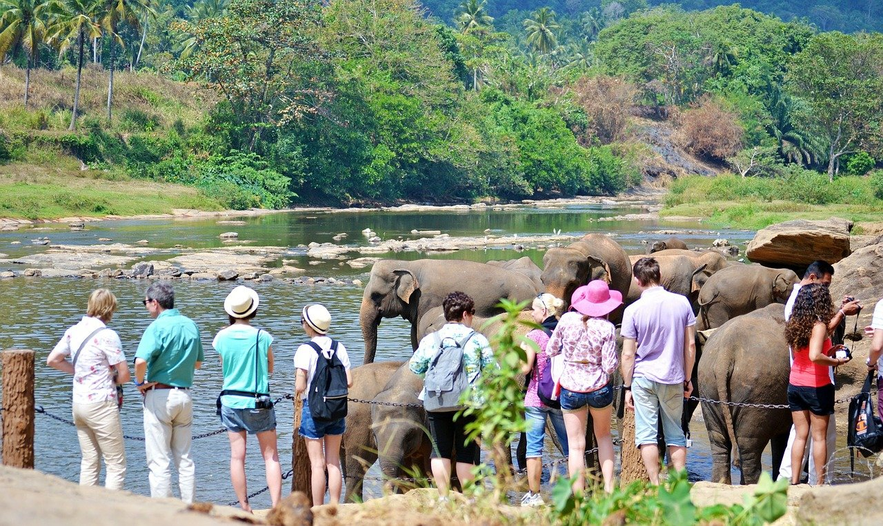 Meet the elephants of Pinnawala