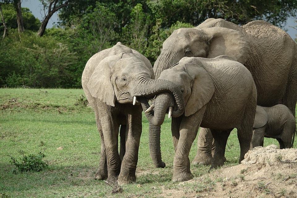 Elephants at Masai Mara National Park