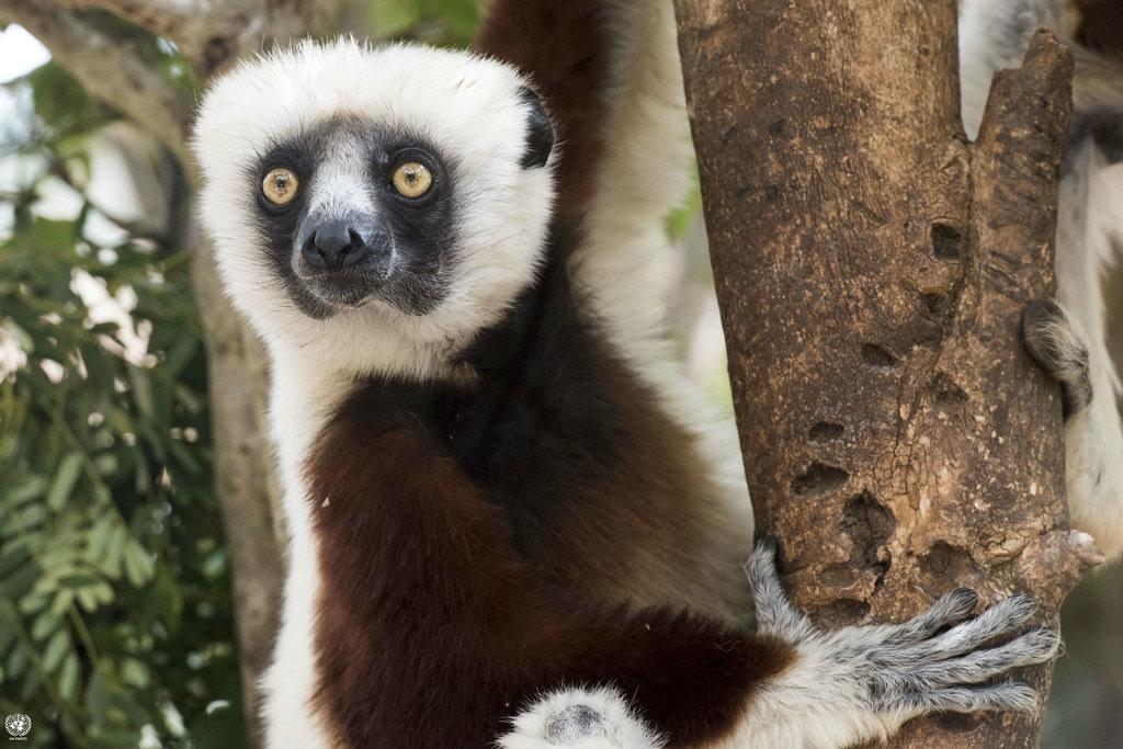 Lemurs Park, Madagascar
