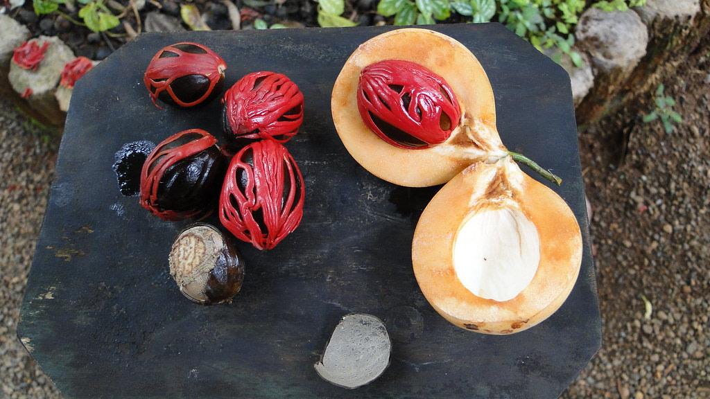 Matale Spice Garden, Sri Lanka