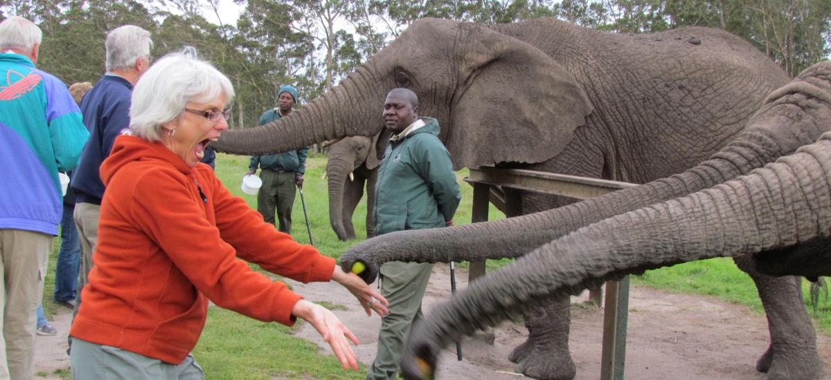 Feeding elephants at Knysna Elephant Park