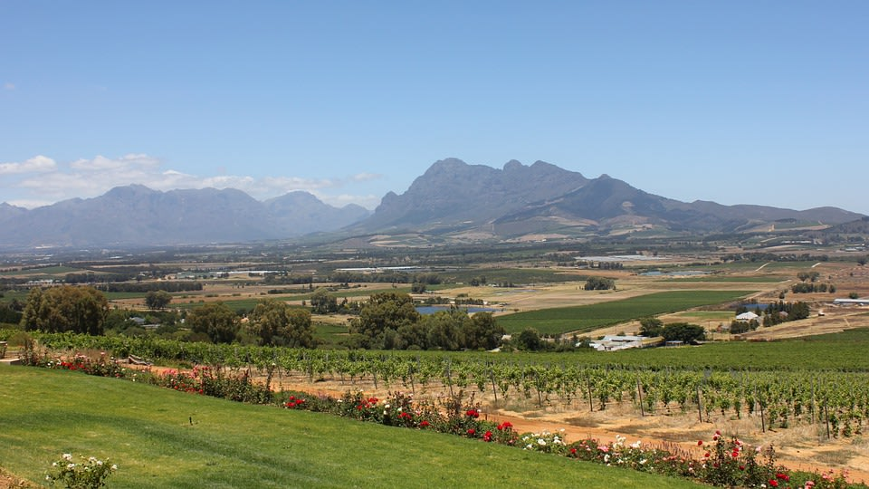 Vineyards of Paarl, the third-oldest city and European Settlement in the Republic of South Africa and the largest town in the Cape Wineland