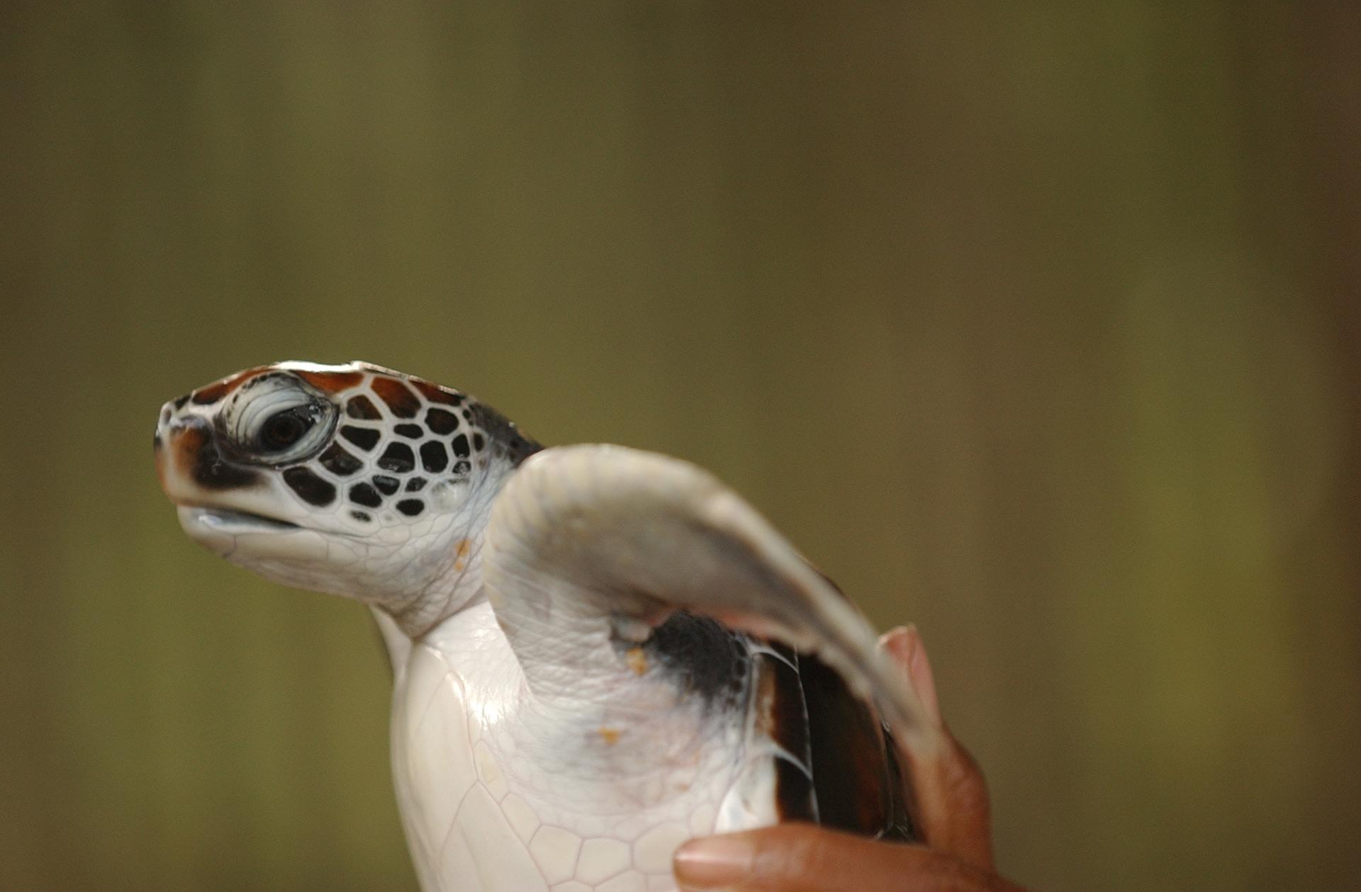 Rekawa Beach Turtles