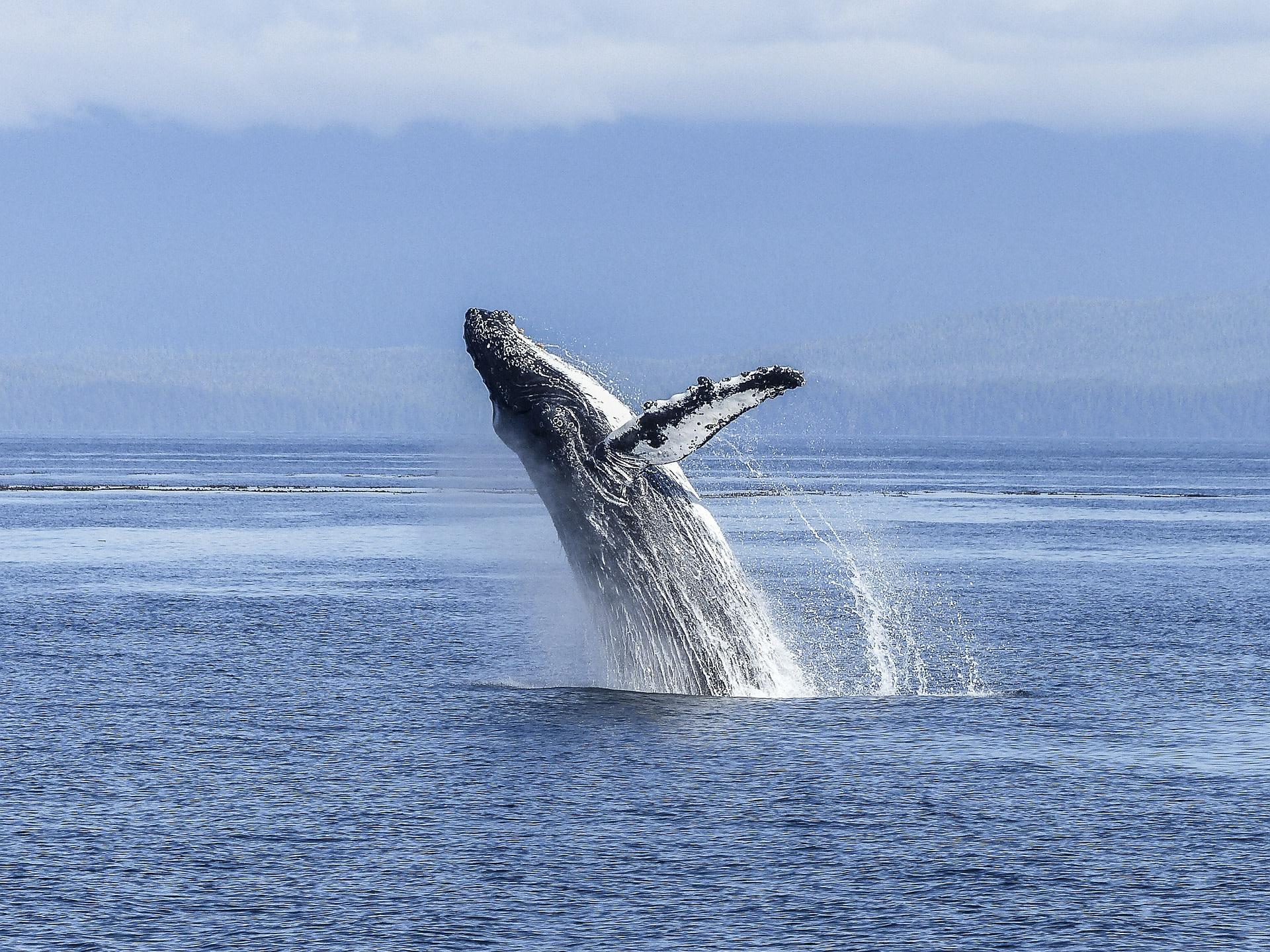 Whale-watching in Mirissa