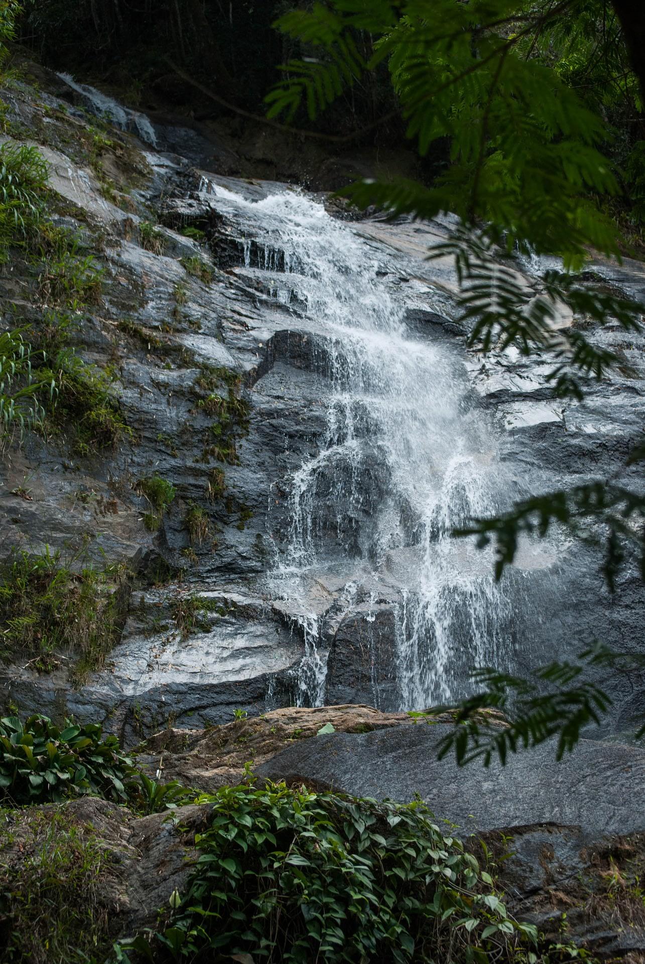 Tijuca Forest