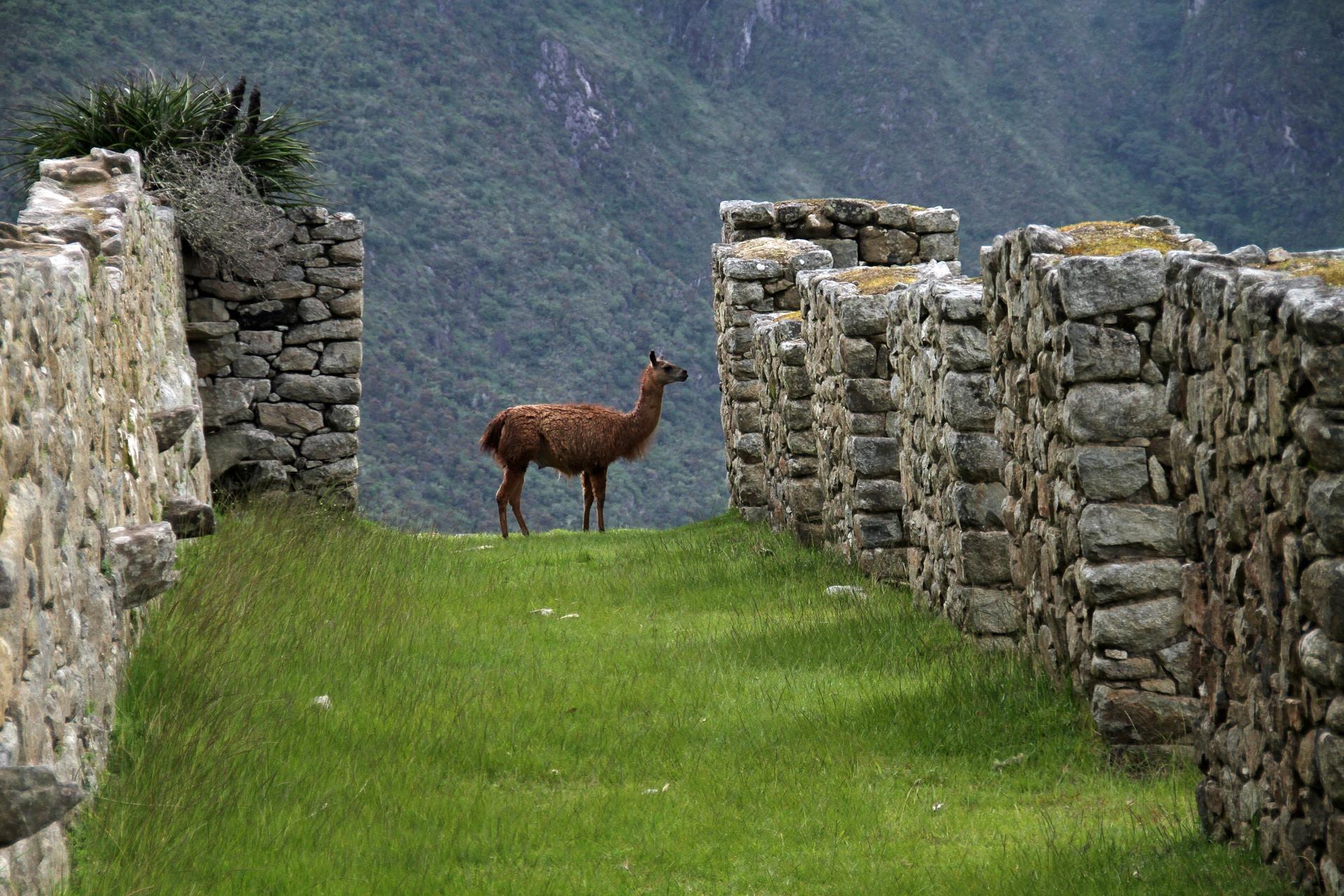 Wildlife of Peru