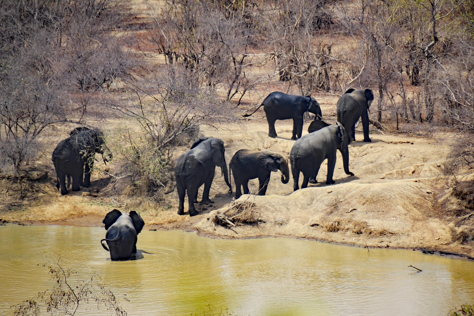 Wildlife at Pendjari National Park