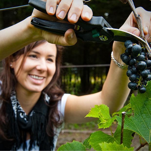 Vignoble du Clos Baillie