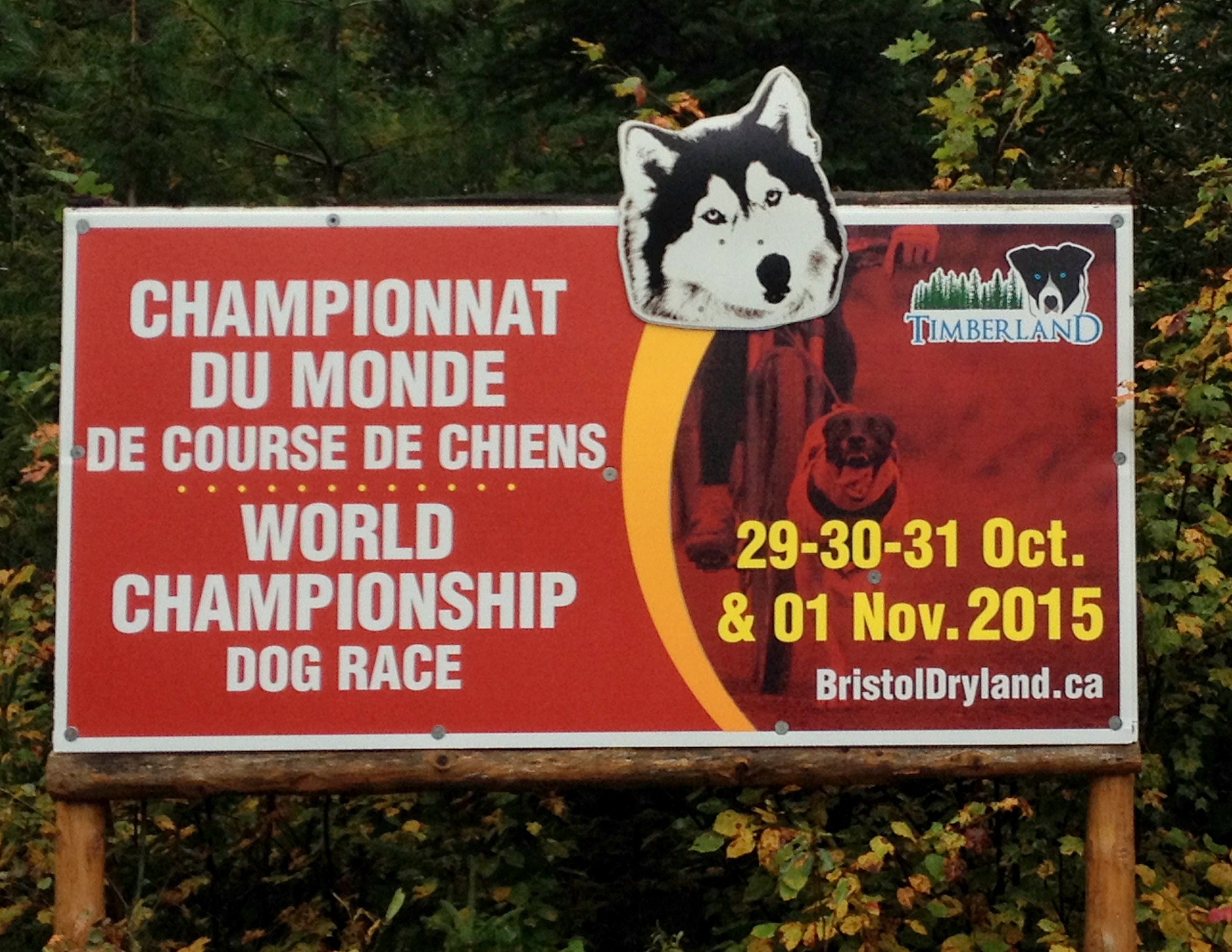 October 29-November 1 World Championship Dog Race at Timberland. Photo by Katharine Fletcher.