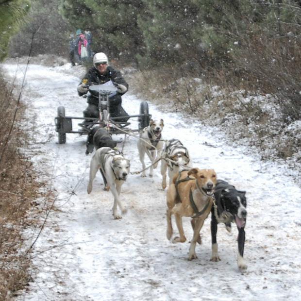 Bristol Dryland - Canadian Championships Dog Race