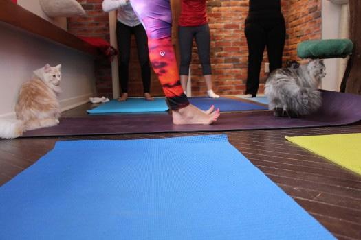 Yoga-Chat 2