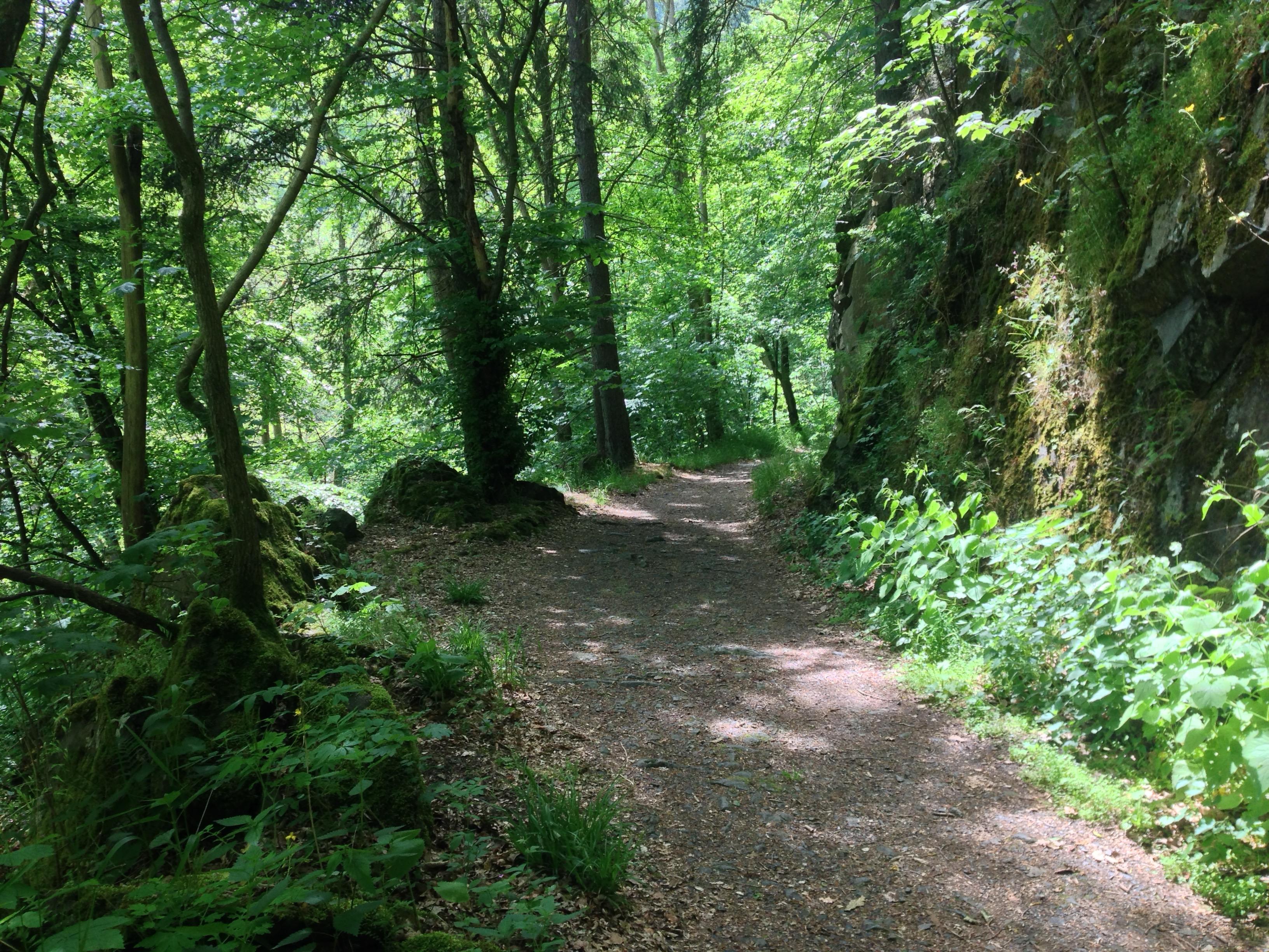 Harz Bodetal Hike Summer