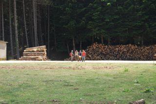 Ferdinandea (Stilo); Deposito di legname