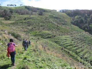 Escursione Tracciolino (MedAmbiente Stilaro, CamminaMenti)