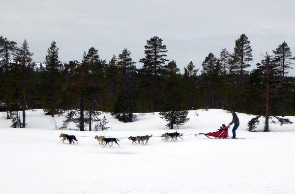 Barnas turlag arrangerer hundekjøring 19 mars 2017