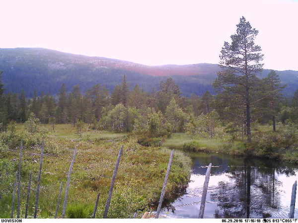 Webkamera Vikerfjell