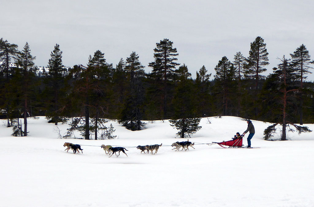 DNT – Barnas Turlag Hundekjøring