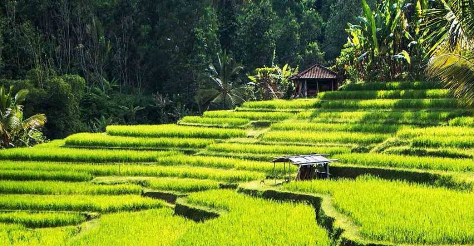Bali Beach Destination with Kuta and Ubud Tour