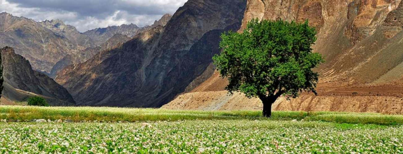 Ladakh Adventure with Pangong and Nubra