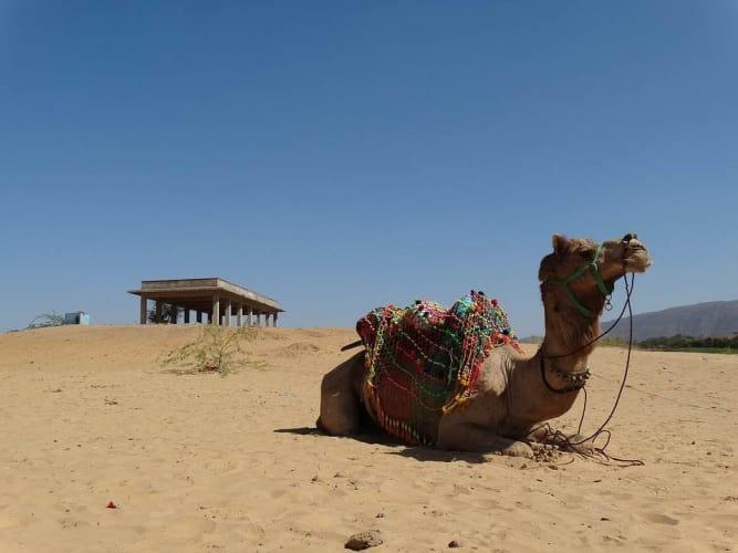 Pushkar Holi Edition; A Group Trip from Delhi