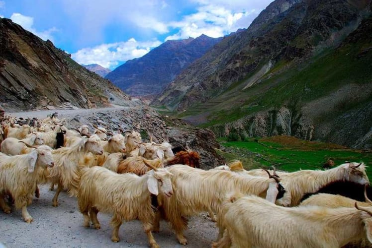 Manali Leh Manali Road Trip; travel by SUV
