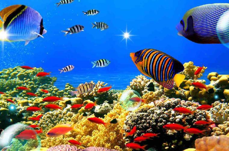Andaman   Port Blair & Havelock Holiday Package