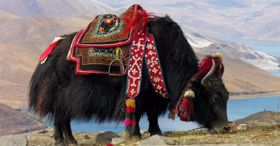 Fascinating Ladakh Package - Flight from Delhi orMumbai