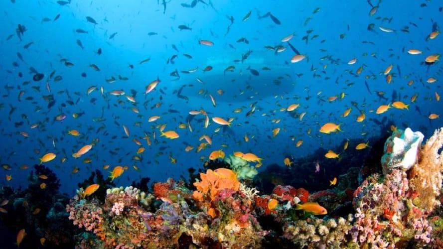 Paradise Island Resort Water Villa; Maldives Honeymoon Package